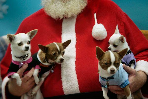Say woof! Dogs pose with Santa for a good cause | HamptonRoads.com | PilotOnline.com