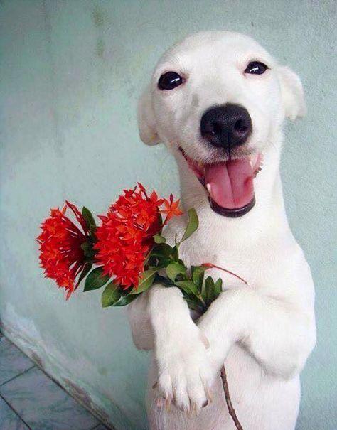 Jack Russel faz sucesso no Instagram com suas fotos engraçadas e expressivas. O site Tudo Sobre Cachorros separou pra gente algumas das melhores fotos.