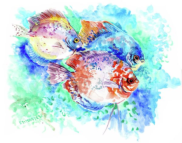 Underwater Tropical Fish Art Tropical Colors Amazon Discus Fish