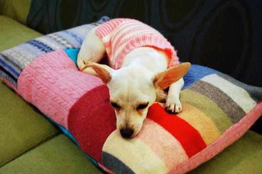 Even your furry friend gets cold. Make a recycled sweater cushion.