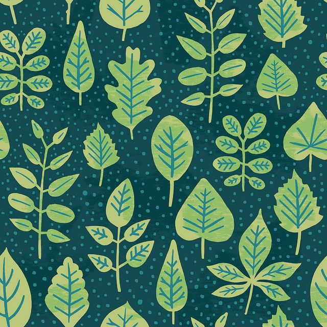 """Daily Pattern: Leaf Identification"" by Alyssa Nassner"