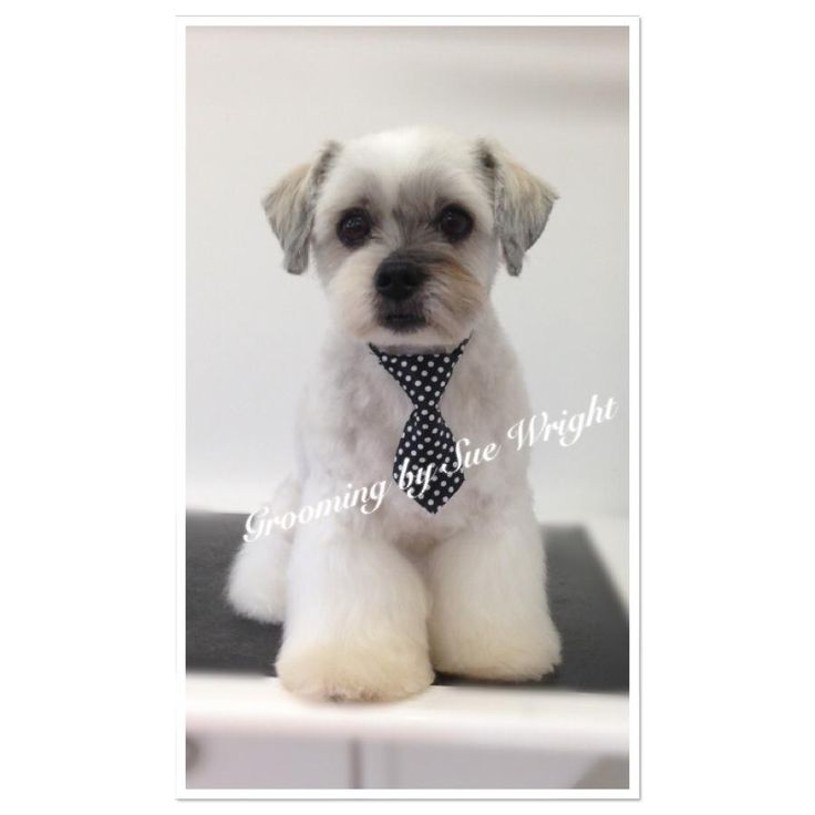 13 best Asian fusion dog grooming images on Pinterest | Dog grooming. Dog grooming business and Asian style