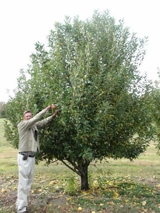 328 best Fruit Trees for the Deep South images on Pinterest