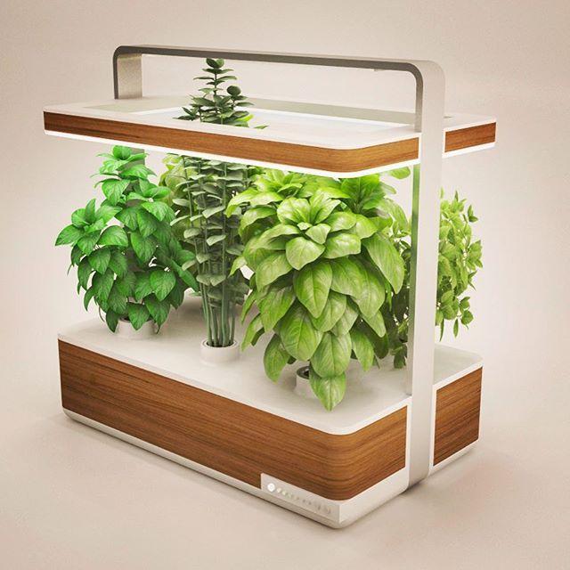 9 best Culteev - Basile, smart indoor garden images on Pinterest