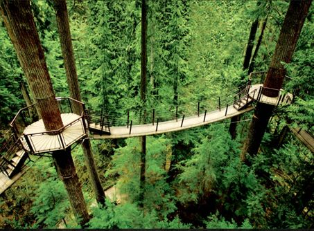The construction of the new 553m suspended walkway is underway in the Redwoods, Whakarewarewa Forest! The Tree Walk will be up to 15m off the ground and give customers a new perspective of the forest (pic indicative)