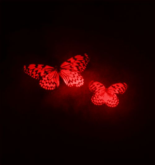 joeleneybeaney:  I saw this gif in black and white and it reminded me of Fatal Frame II: Crimson Butterfly so I had to make it red.