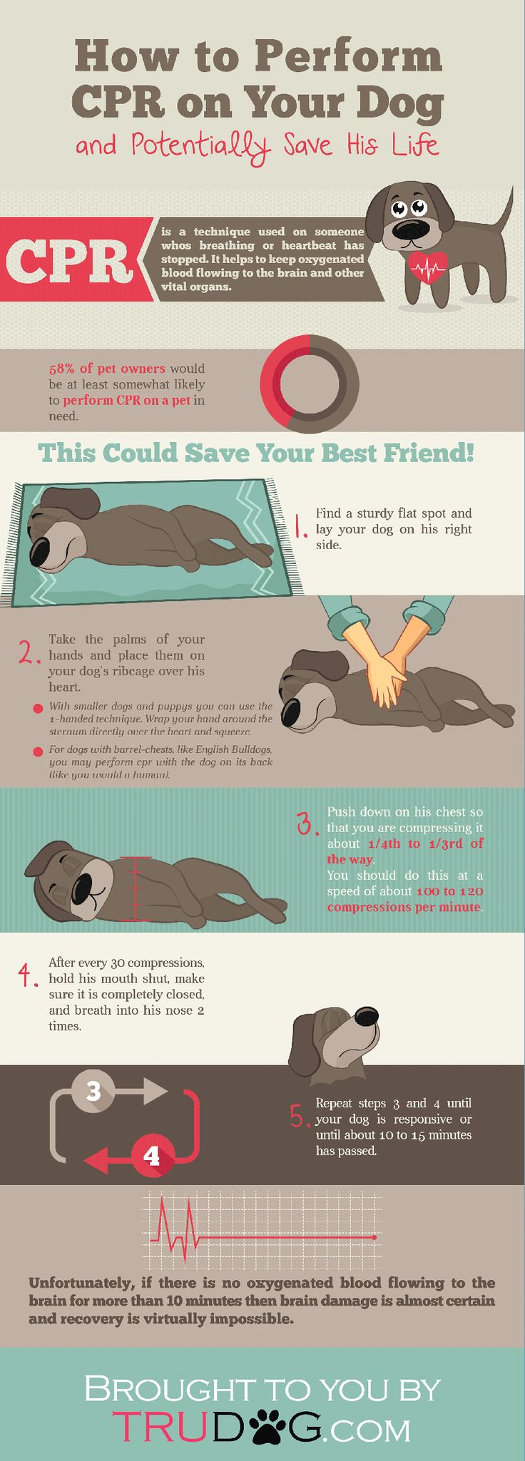 How to Perform CPR on your Dog — Dirty Dog Grooming & Self-Serve Dogwash