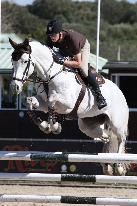 While over the past decade, other registries have split their breeding stock into jumper-type and dressage-type, the Westphalian verband resists specialization. Instead, Westphalians are bred to be good movers with high rideability and jumping ability for a market of mostly amateurs who appreciate versatile, pleasant horses. Img: KOREA DE HUS