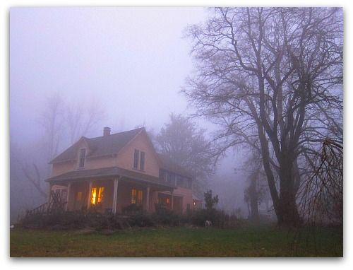 Foggy winter morning on Vashon Island