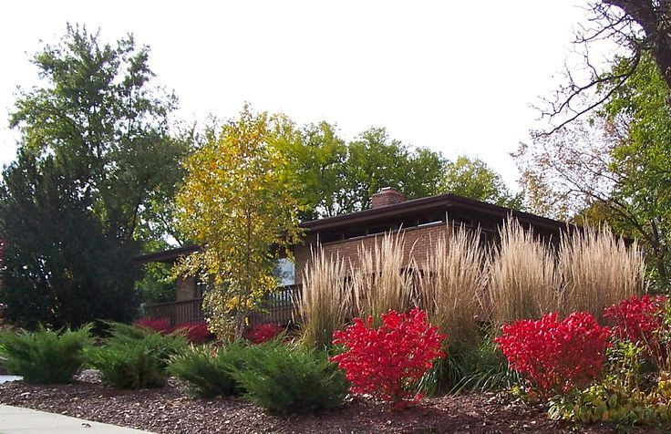 burning bush landscape ideas