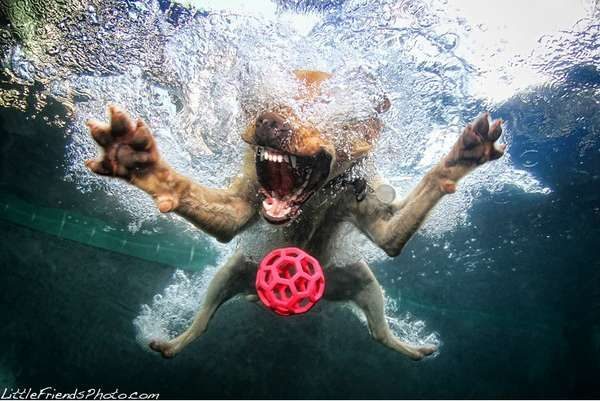 Underwater Dog Photography  Seth Casteel Captures Adorable and Frightening Pets Swimming