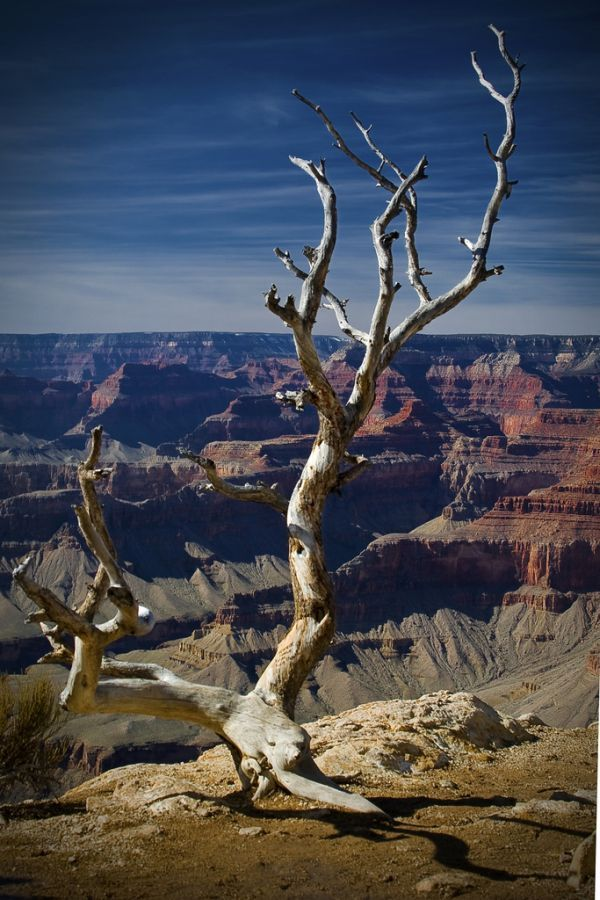 Death on the Rim Grand Canyon National Park Arizona  flagstaff spring march photography  rim world  high lake  arrowhead california  marshall winter snow warm  cold  death  blue read yellow orange  pink green  photoshop  tree dirt vacation  meteror  shower  wonder mother nature travel tourist awesome shot reflect peace life