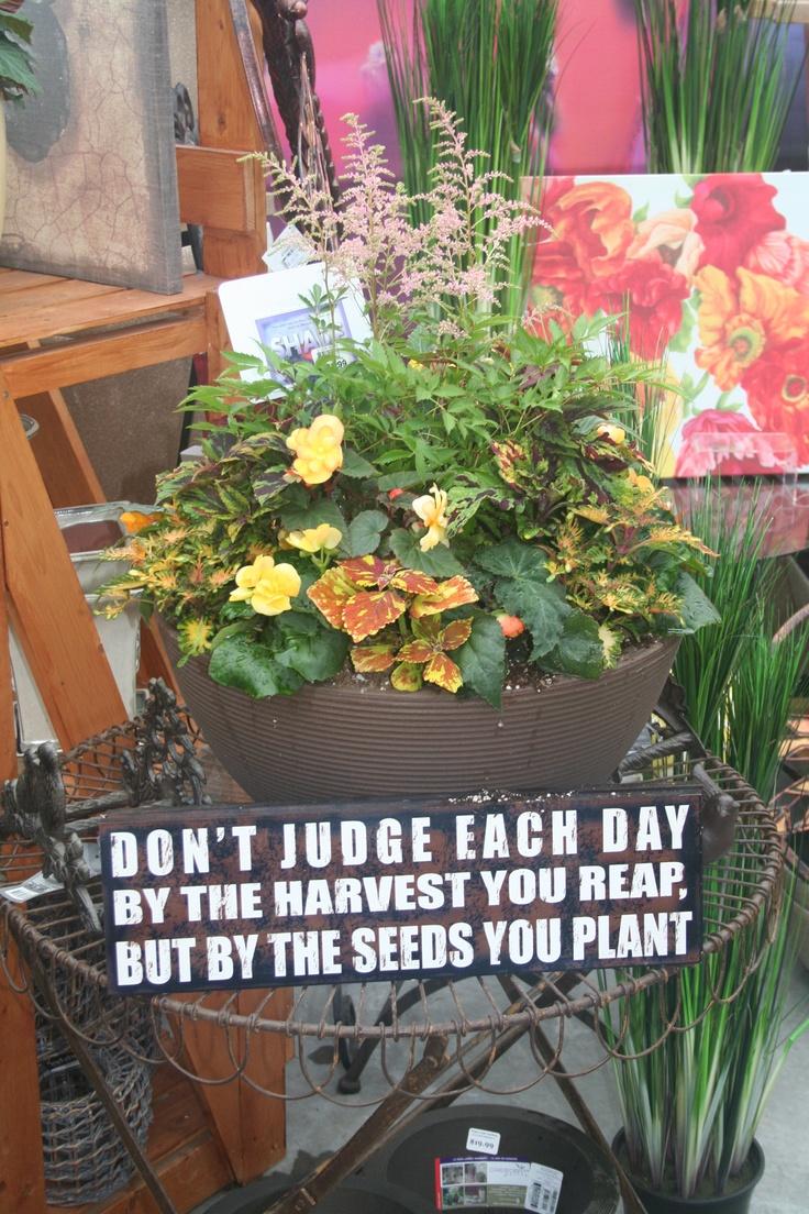 best summer flower pots images on pinterest flower pots plant