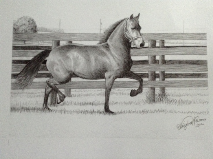 My first horse portrait