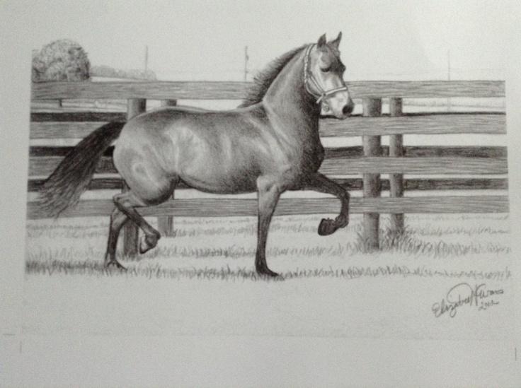 My first horse portrait