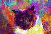 "New artwork for sale! - "" Sacred Birman Cat Adidas Breed Cat  by PixBreak Art "" - http://ift.tt/2tUn1Hw"