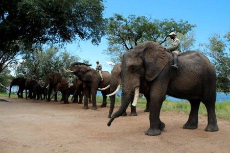 Elephant experience with Saf Par close to Livingstone in Zambia.