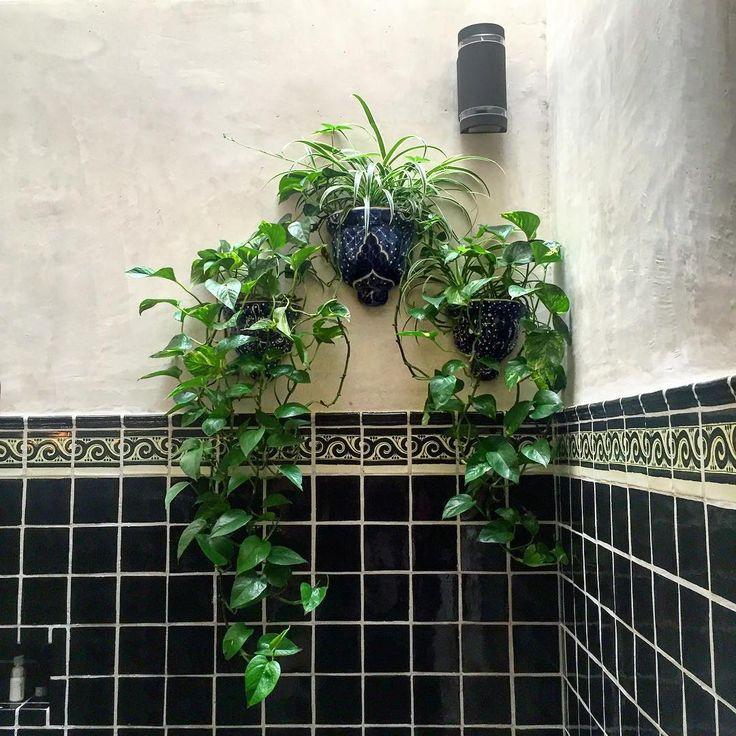 Oltre 25 fantastiche idee su piante da bagno su pinterest for Piccoli piani di casa verdi