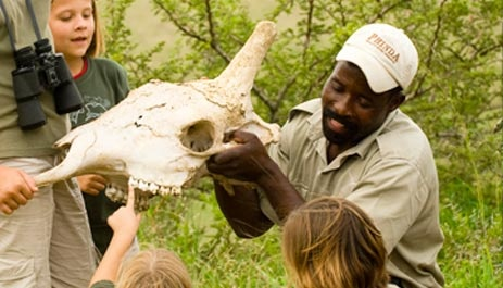 Safaris for families