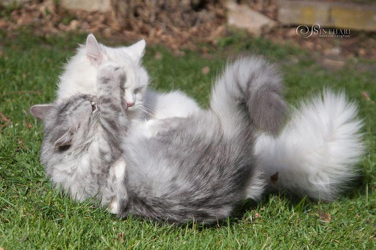 Icarus and Yuki - two buddies playing