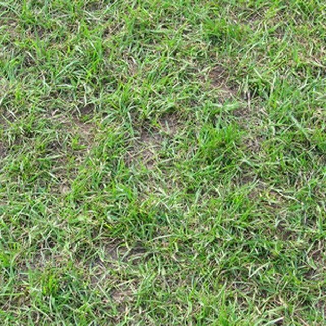 Best 20 bermuda grass ideas on pinterest bermuda grass for Lawn ideas without grass