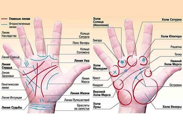 Секреты хиромантии: Счастливая ли у вас рука?        Для того, чтобы…