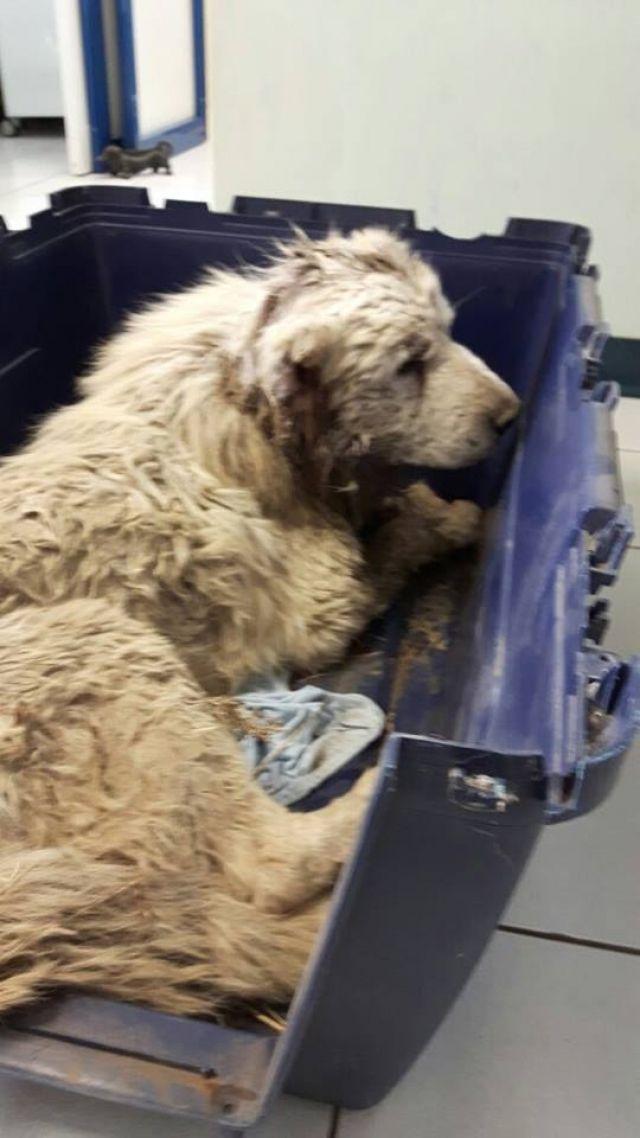 Achtung Halten Sie Kleine Kinder Und Sensible Menschen Von Den Bildern Ganz Unten Fern Die Videos Und Die Anderen Fotogalerien Tiere Retten Hunde Erste Hilfe