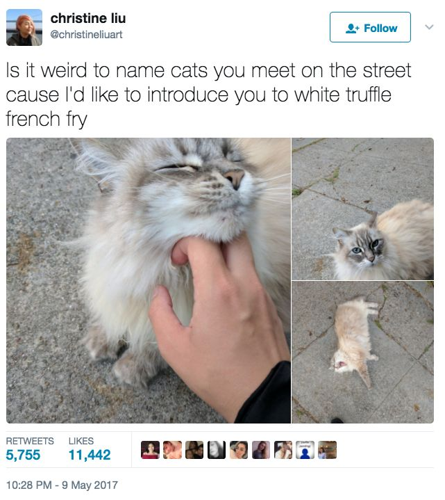 99 Very Important Animal Tweets Of 2017 (So Far)