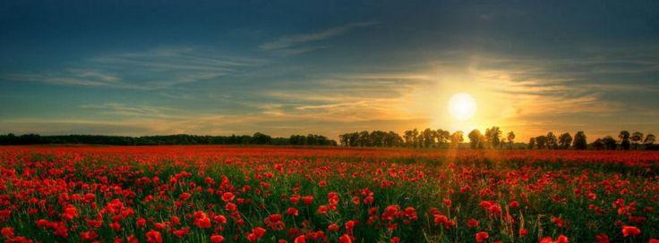 Red flower garden facebook cover