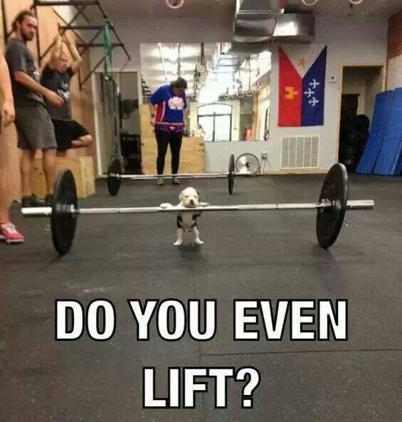 Do you even lift? #lift #lifting #bodybuilding #puppy #dog ...