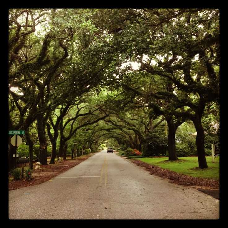 Magnolia Springs, Alabama. One of the most beautiful places I have ever experienced.