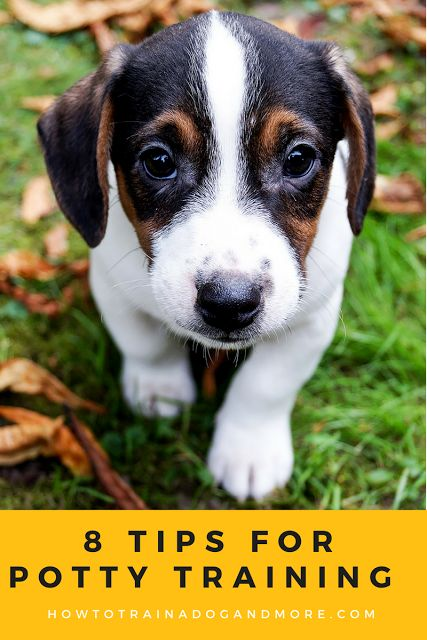 8 Tips for Potty Training your Puppy...visit this blog for lots of dog training tips, including barking, biting, aggression, toilet training, jumping, pulling, separation anxiety and more!