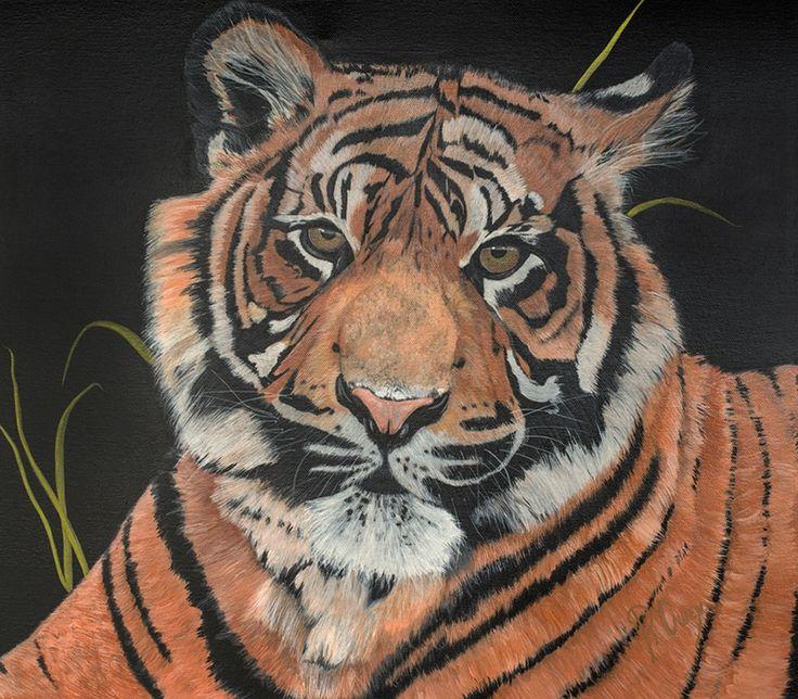 """Image of """"ASMARA"""" Sumatran Tiger"""