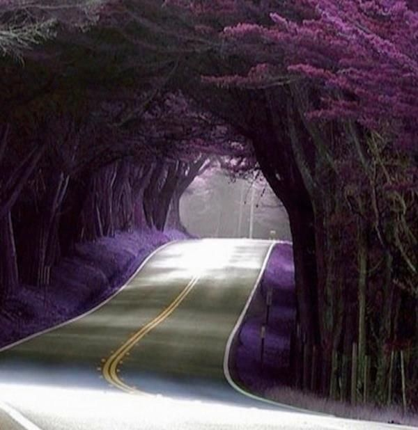 purple tree tunnel in Portugal Just beautiful   RePinned by : www.powercouplelife.com