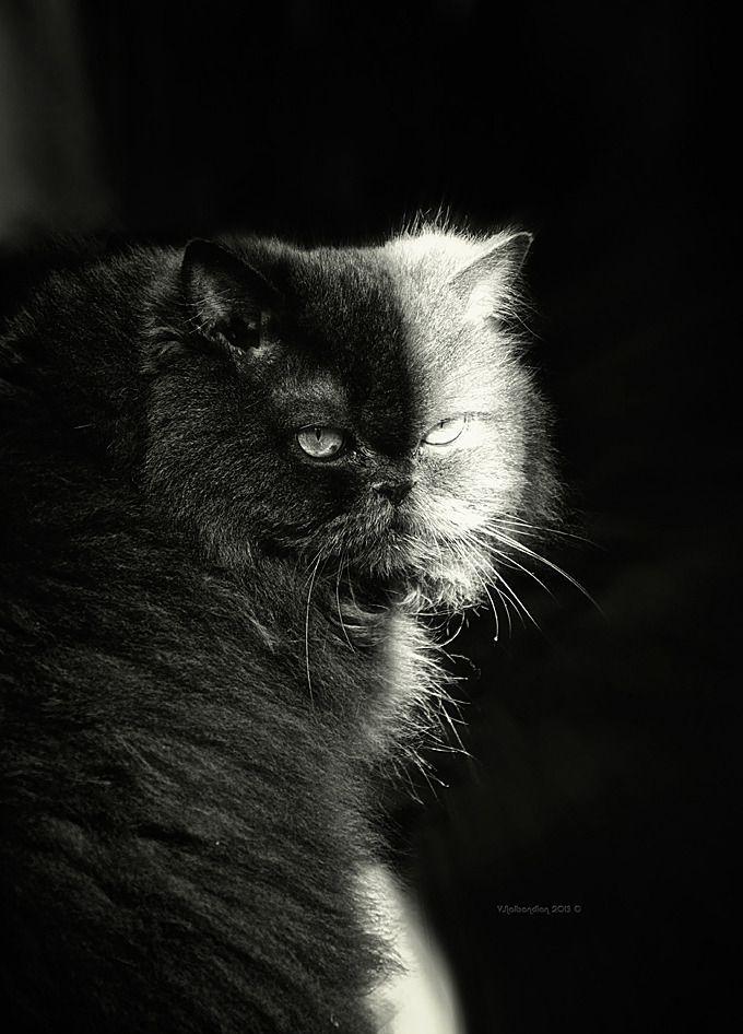 Half Black Half White Cat Black And White Cat More At
