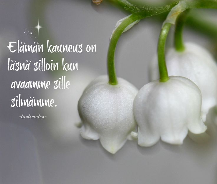 Kielo, lily of the Valley