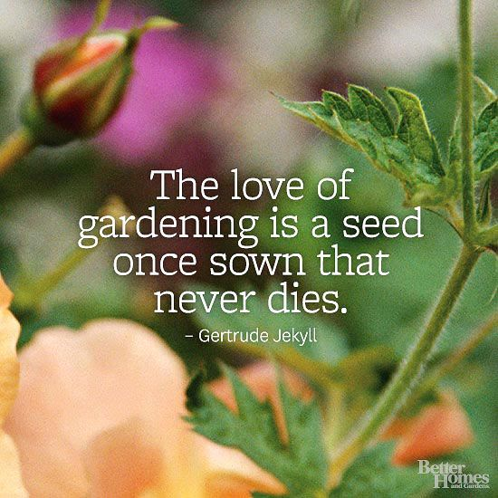 """""""The love of gardening is a seed once sown that never dies."""" -Gertrude Jekyll"""