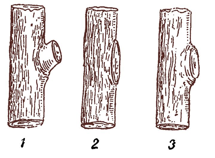 1. Неправильная обрезка - оставлен пенек. 2. Неправильная обрезка - слишком близко к стволу. 3. Правильная обрезка.