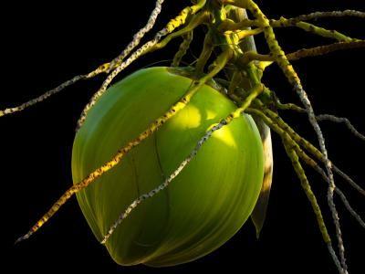 31 úžasných účinků kokosového oleje