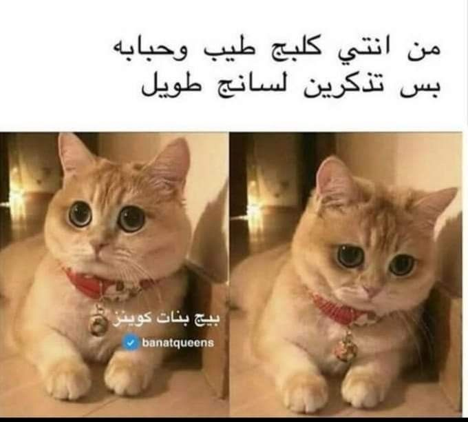 Pin By 𝐴𝑠𝑎𝑙𝑎ℎ On كرتون Funny Picture Jokes Arabic Funny Funny Arabic Quotes
