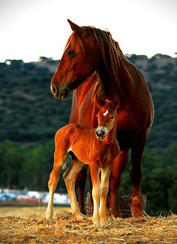 Mama Horse & Beautiful Baby
