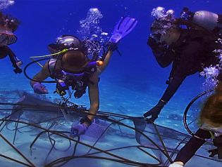 We run a range of career enhancing programs as well as coral protection programs right here at out PADI Career Development Center in Gili Trawangan under the guidance of our Platinum PADI Course Director.