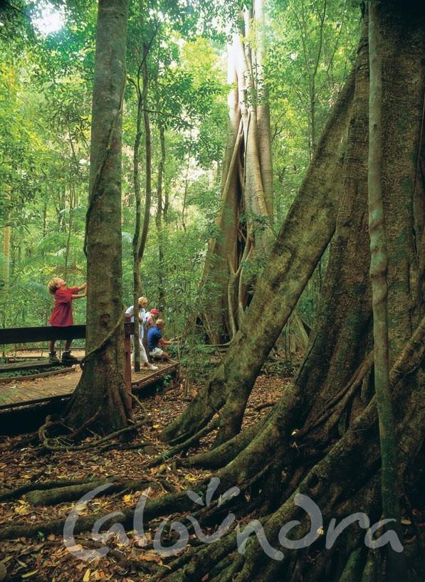 Bush Walks and Hiking - Caloundra, Sunshine Coast #airnzsunshine