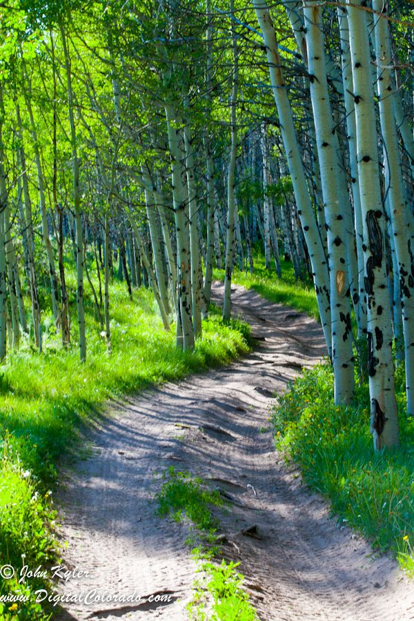 A trail leading through the aspen trees just out of Cowdry, Colorado.