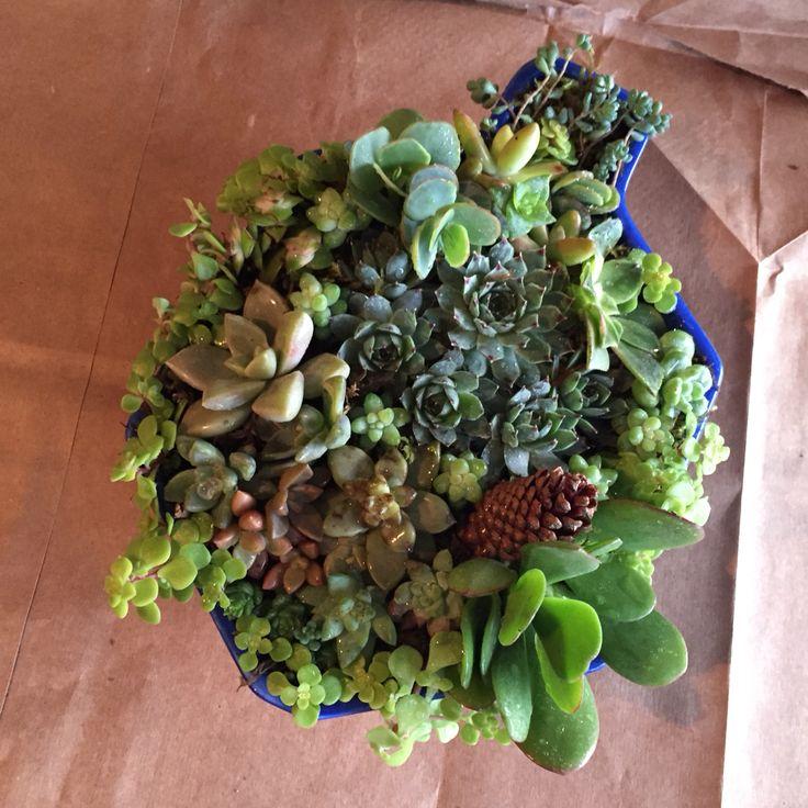 Lush Succulents vintage dreidel arrangement! Perfect gift for Hanukkah! Contact LushSucculents@gmail.com