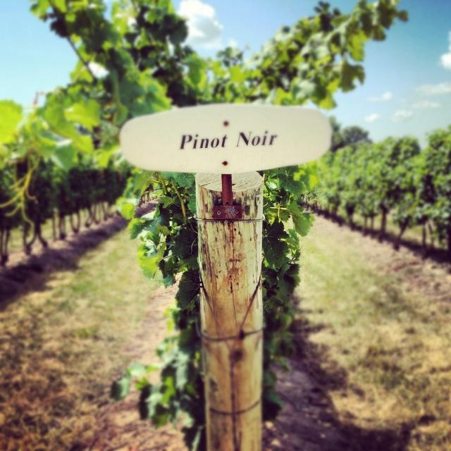Reif Estate Winery, Niagara-On-The-Lake