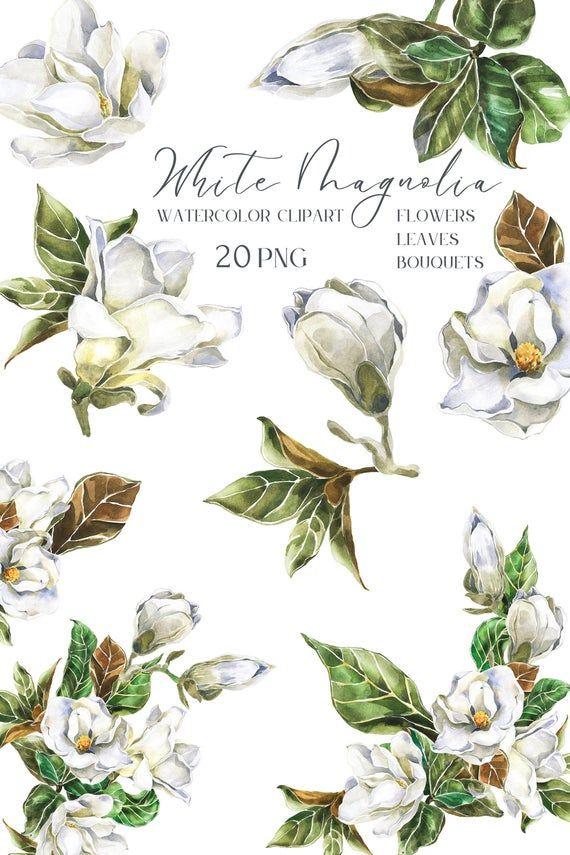 White Watercolor Magnolia Flower Clipart Spring Floral Bouquet Etsy In 2020 Flower Clipart Magnolia Flower Botanical Flowers