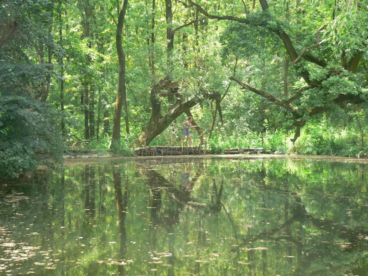 Úľany N. Žitavou (Slovakia), water, trees, nature, Sofia :D :)