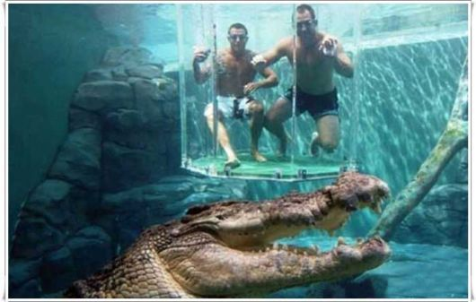 "#11 Go for a swim in Australia ... with crocodiles! Thrill-seekers have travelled down under to swim up and next to massive saltwater crocodiles. Tourists can climb into a clear acrylic ""cage of death"" and cozy up to the largest crocodile species on earth."