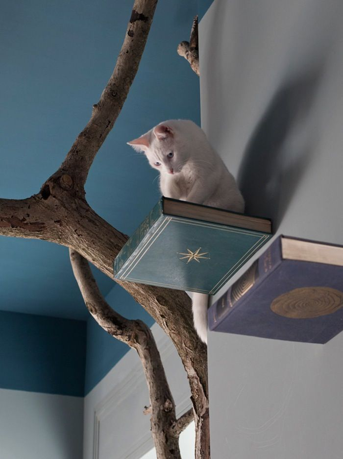 Cat wall perches made from wood bases and old books. - Romeow Cat Bistro - [someone else's caption]